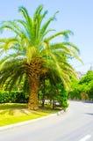 Palmträd vid vägen Arkivfoto