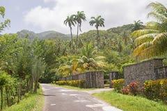 Palmträd vid vägrenen Arkivbilder