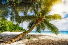 Palmträd vit sand, turkosvatten på den tropiska stranden, paradis royaltyfria bilder