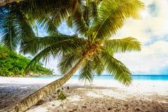 Palmträd vit sand, turkosvatten på den tropiska stranden, paradis arkivbilder