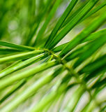 Palmträdbakgrund Arkivbilder