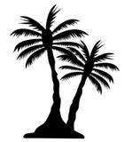 Palmträdbild Arkivfoton