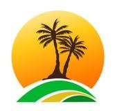 Palmträdbild Royaltyfria Bilder