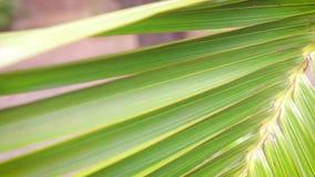 Palmträdblad i trädgården