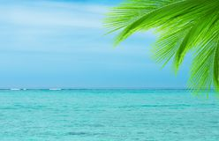 Palmträdblad på havbakgrund Arkivfoton
