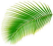 Palmträdblad, vektorillustration Arkivfoto