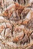 Palmträdcloseup Royaltyfria Foton