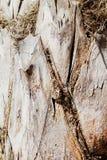 Palmträdcloseup Royaltyfri Fotografi