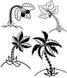 PalmträdcollectionÂŒ Arkivfoton