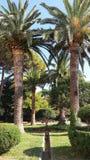 Palmträden Royaltyfri Foto
