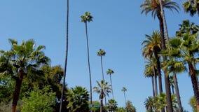 Palmträden av Beverly Hills - loppfotografi arkivfilmer