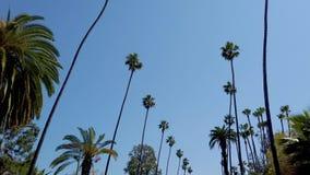 Palmträden av Beverly Hills - loppfotografi lager videofilmer