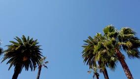 Palmträden av Beverly Hills - loppfotografi stock video