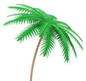 Palmträdet Royaltyfria Bilder