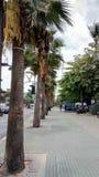 Palmträdet Arkivbilder