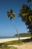 Palmträdet, Goa Arkivbild