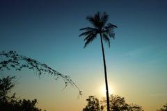 Palmträdet, Goa Arkivfoto