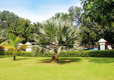 palmträdet i ett härligt parkerar Royaltyfri Fotografi