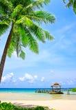 Palmträdet i tropiskt gör perfekt stranden arkivfoto