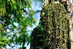 Palmträdet kärnar ur Royaltyfri Foto