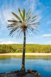 Palmträdet med blå himmel och pittoresk sand sätter på land på backgren Arkivbild