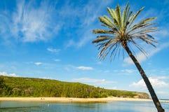 Palmträdet med blå himmel och pittoresk sand sätter på land på backgren Fotografering för Bildbyråer