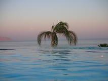 Palmträdet nära havet Fotografering för Bildbyråer