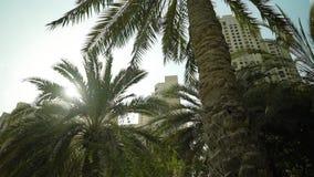 Palmträdet och solen arkivfilmer