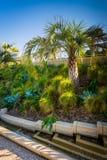 Palmträdet och trädgårdar på Tongva parkerar, i Santa Monica Royaltyfria Foton