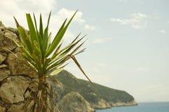 Palmträdet och vaggar väggen på grekisk kust Royaltyfria Bilder