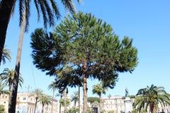 Palmträdet parkerar i Rome Fotografering för Bildbyråer
