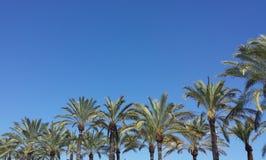 Palmträdet promenerar medelhavs- blå molnfri himmelhimmel royaltyfri foto