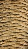 Palmträdet texturerar Royaltyfri Fotografi