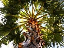 Palmträdfilialer och sidor Royaltyfri Fotografi