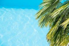 Palmträdfilialer på den tropiska stranden palmblad på bakgrund för blått vatten Palmblad mot vågor för ett blått vatten Fotografering för Bildbyråer