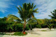 Palmträdgränd Royaltyfria Bilder