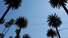 Palmträdgränd - som är typisk för Beverly Hills - loppfotografi stock video
