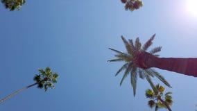 Palmträdgränd - som är typisk för Beverly Hills - loppfotografi lager videofilmer