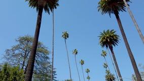 Palmträdgränd - som är typisk för Beverly Hills - loppfotografi arkivfilmer