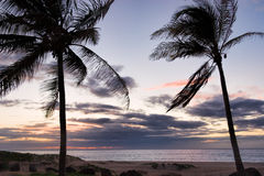 Palmträdhav och solnedgång i Hawaii Arkivbild