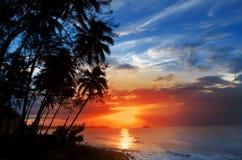 Palmträdkontur och en solnedgång över havet Arkivbild