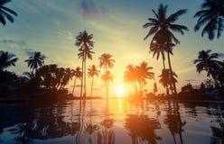 Palmträdkontur på den fantastiska solnedgången på stranden Arkivfoton