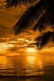 Palmträdkontur på en härlig strand på solnedgången Arkivbild