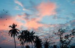 Palmträdkontur på solnedgången i Sri Lanka Arkivbilder
