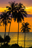 Palmträdkontur på solnedgången, Thailand Royaltyfria Foton