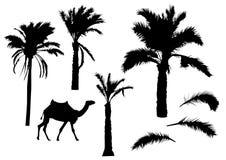 Palmträdkonturer Royaltyfria Bilder