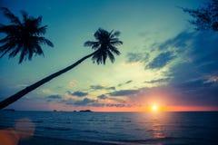 Palmträdkonturer på den tropiska stranden under solnedgång Natur arkivbild