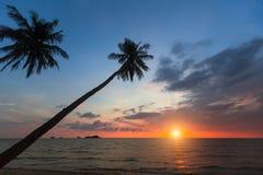 Palmträdkonturer på en tropisk havsstrand arkivbilder
