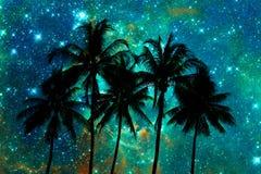 Palmträdkonturer, stjärnklar natt Royaltyfri Bild