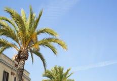 Palmträdkroon i solig dag för stad Arkivbild